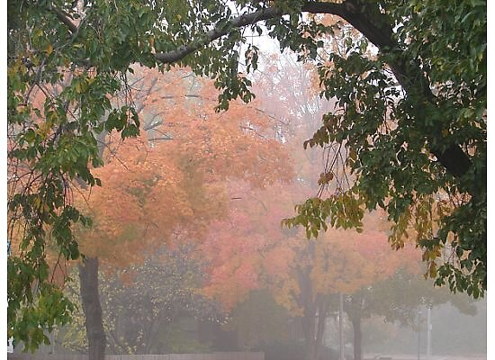 Foggy Fall Morning by danabee