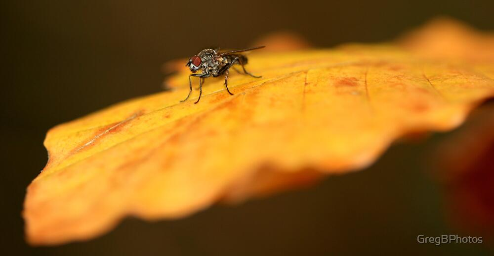 The Fly by GregBPhotos