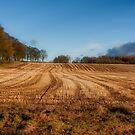 Last days of Autumn by Jeremy Lavender Photography