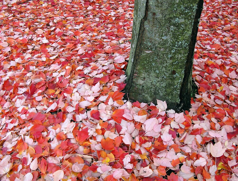 Fall Carpet by Corey Bigler