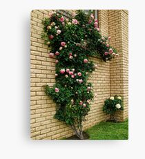 """Nahema"" Climbing Rose - My Garden Canvas Print"