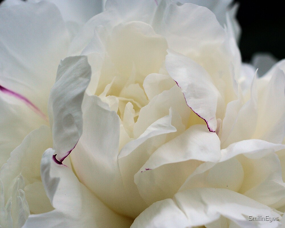 White Peony Up Close by SmilinEyes