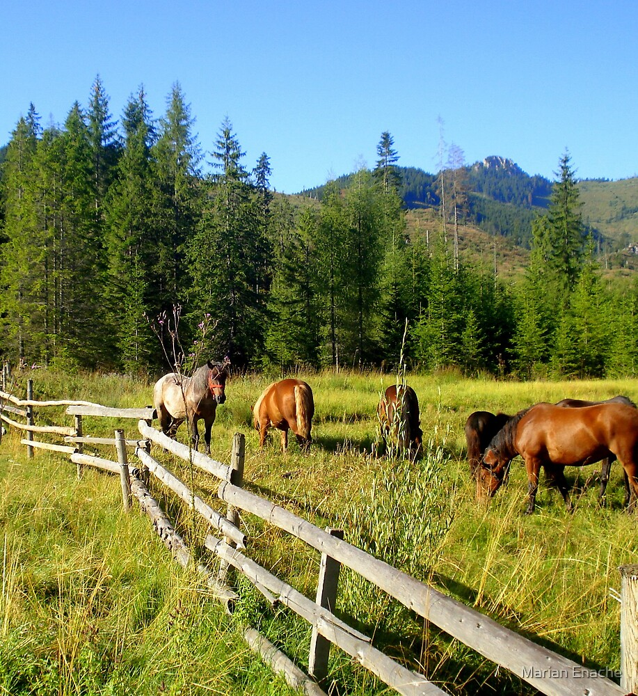 horses free by Marian Enache