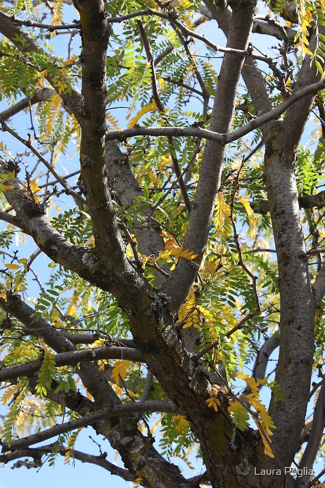 Black Walnut Tree by Laura Puglia