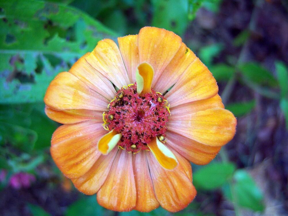Flower Series by DottieDees