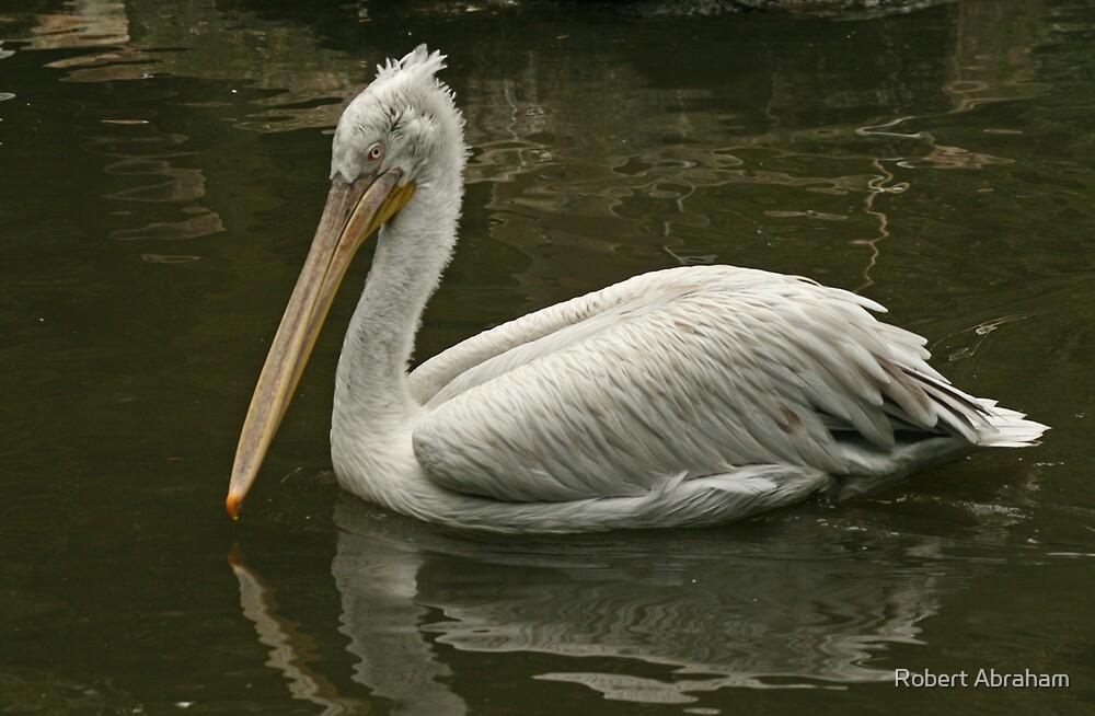 Dalmation Pelican by Robert Abraham