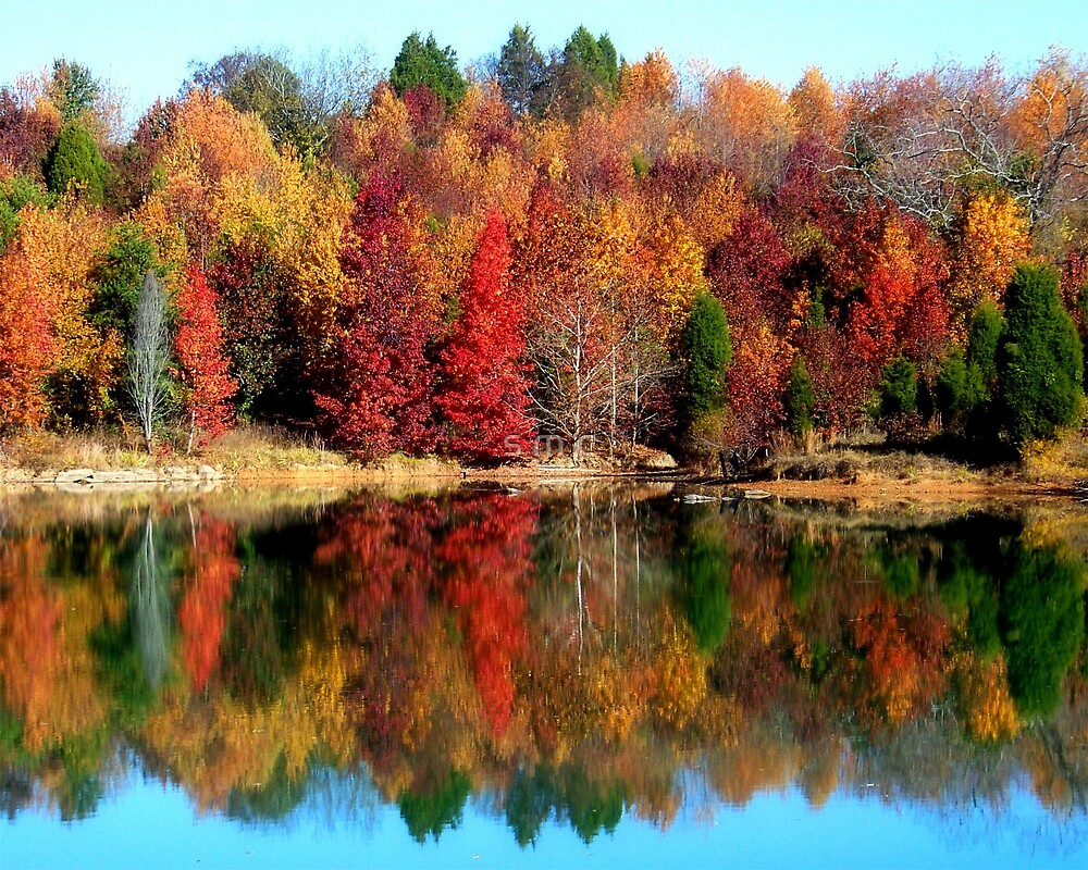 reflections of autumn by s m c