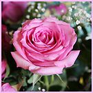 Maggie's Rose by Judi FitzPatrick