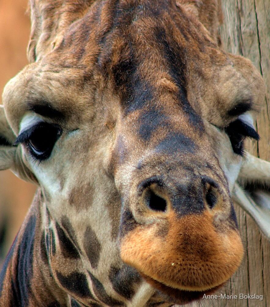 Love this Giraffe by Anne-Marie Bokslag