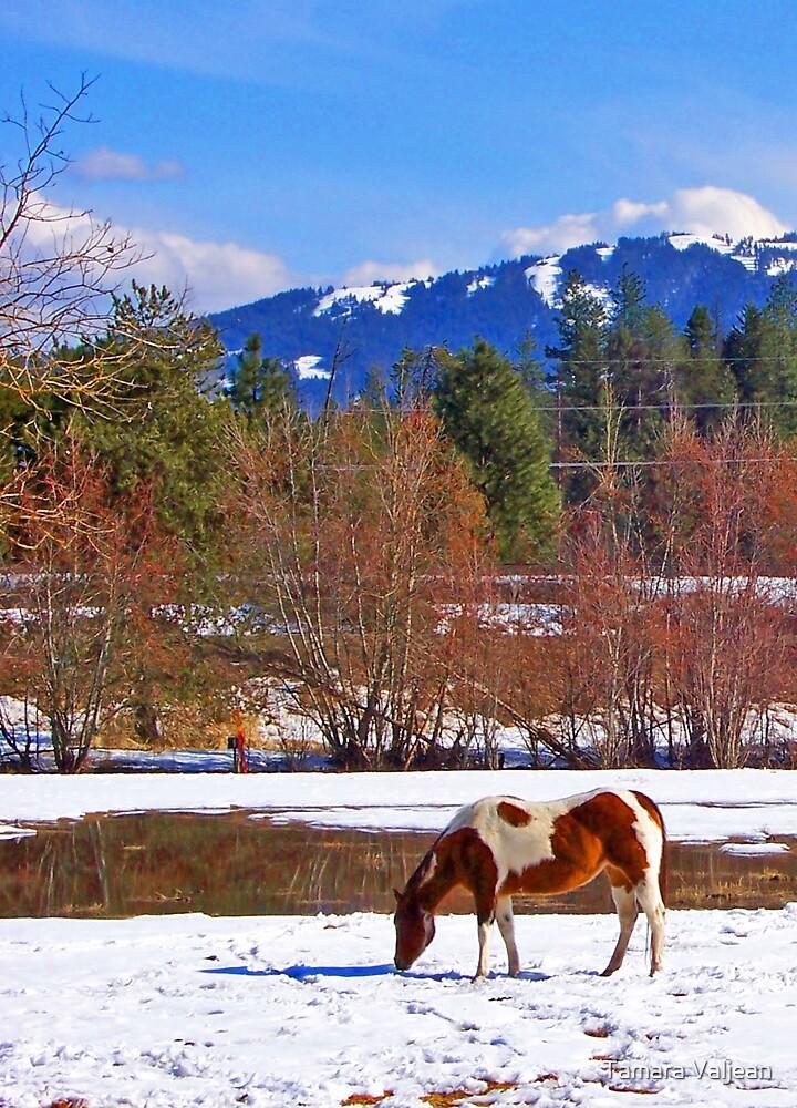 Painted Horse by Tamara Valjean