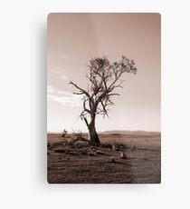 Lonely old Paddock Tree Metal Print