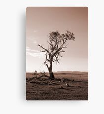 Lonely old Paddock Tree Canvas Print