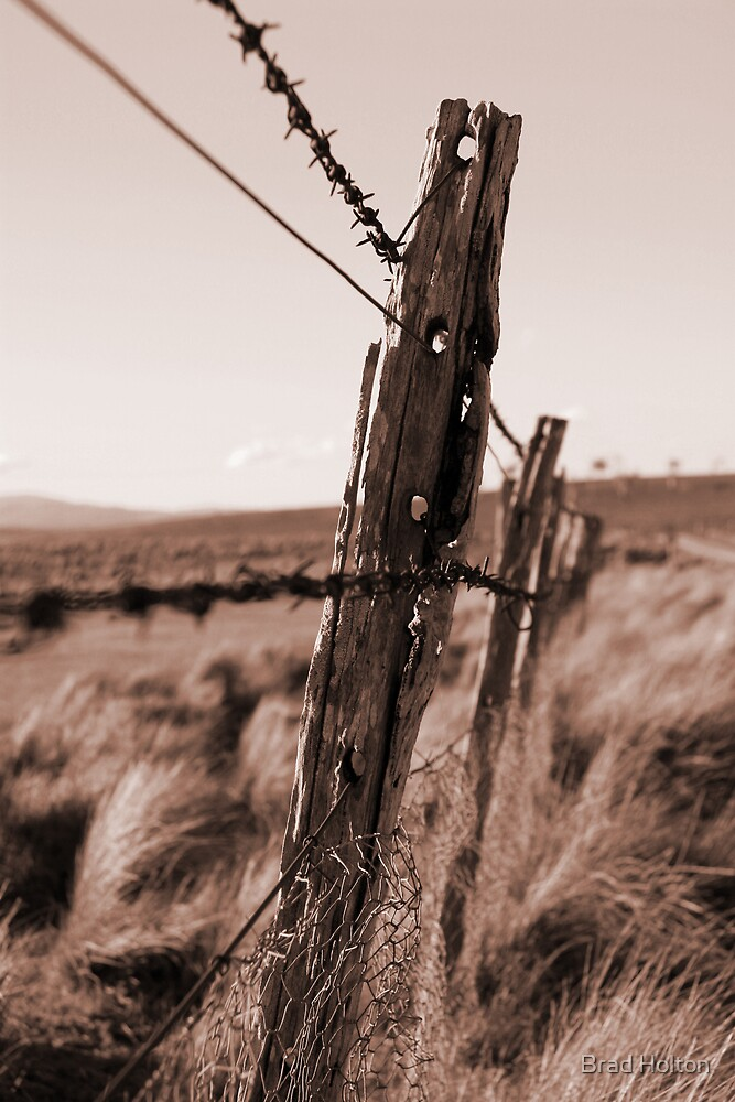 Barbed Fence by Brad Holton