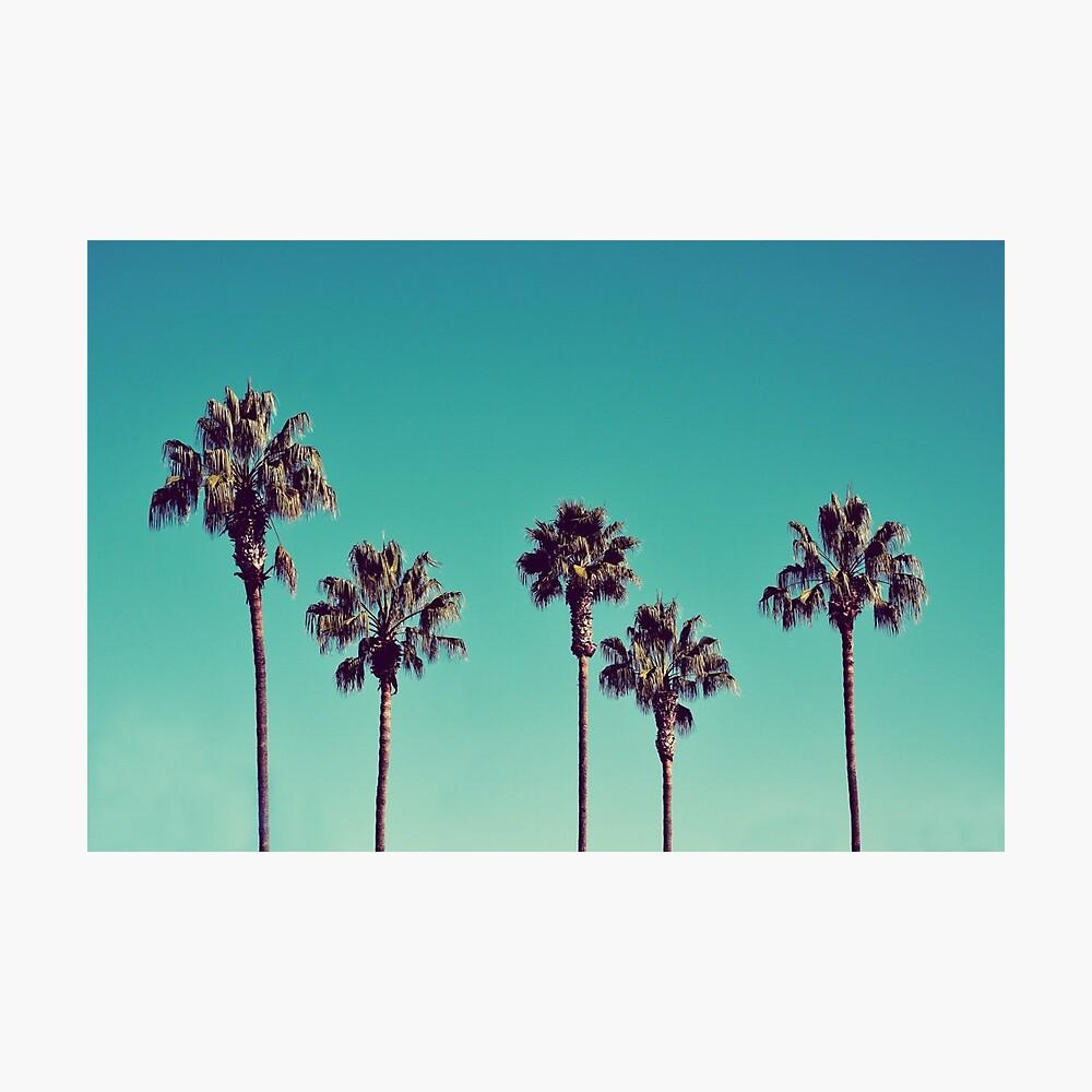 Palmeras de california Lámina fotográfica