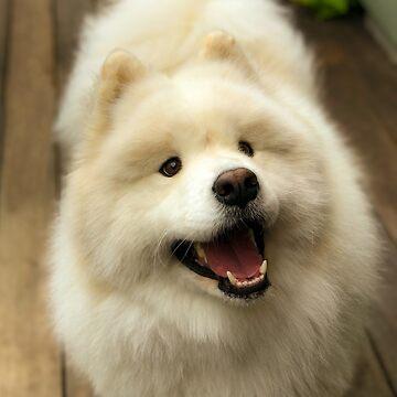 Samoyed Smile by ryderthesamoyed