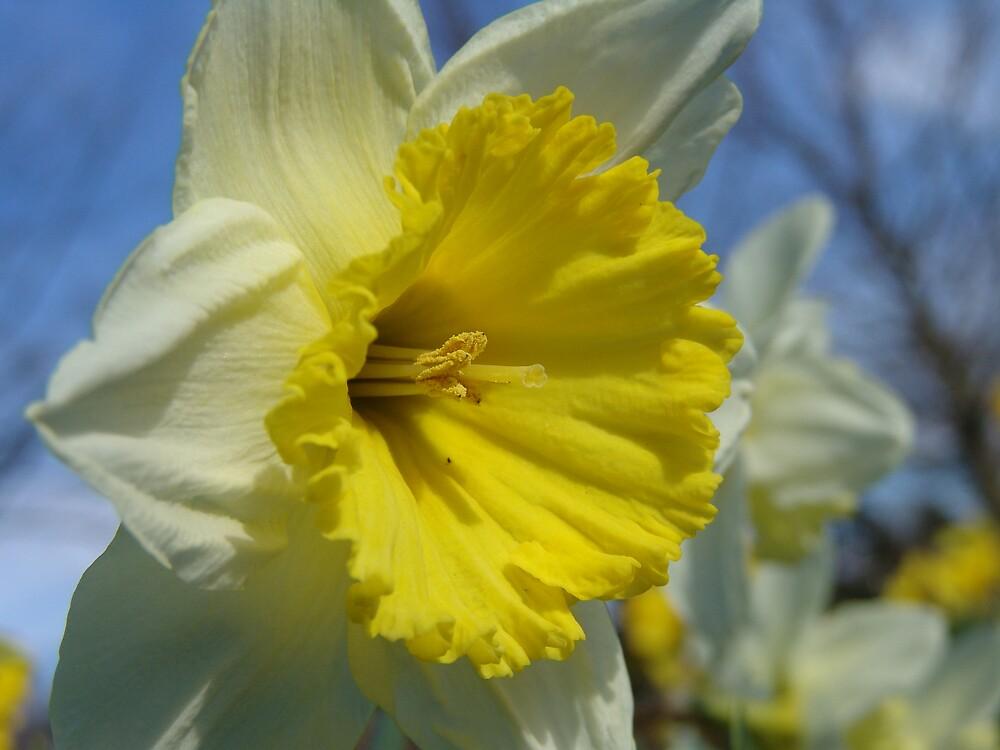 Flower by Chris Filer