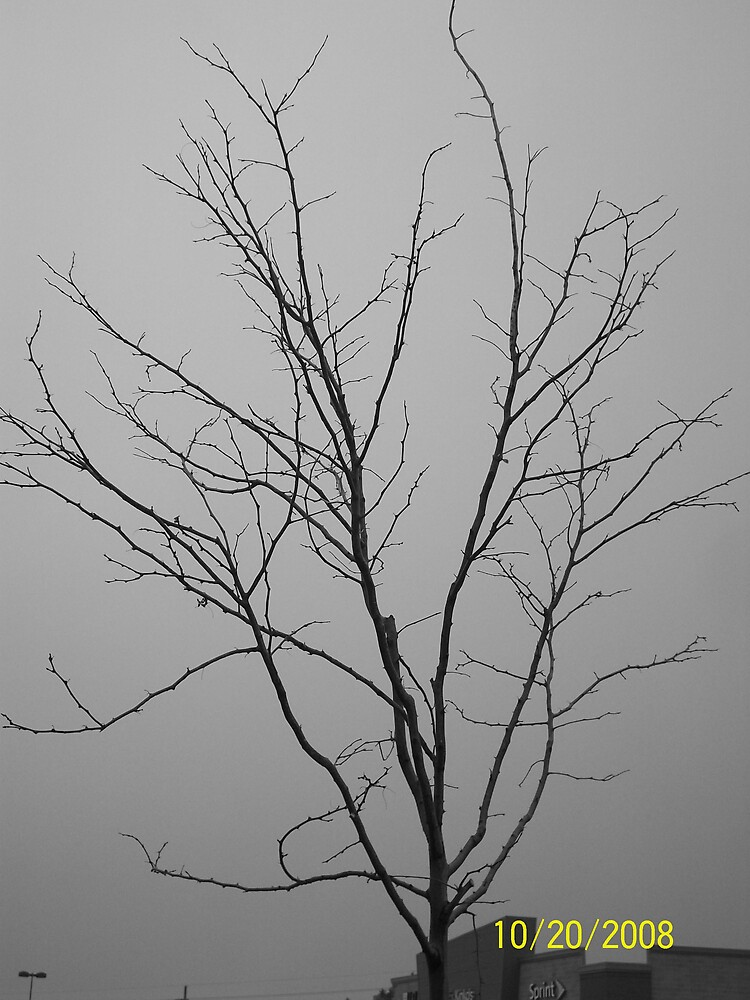 Fall Tree Black & White by HungarianGypsy