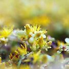 Yellow Sedum by Henrik Lehnerer