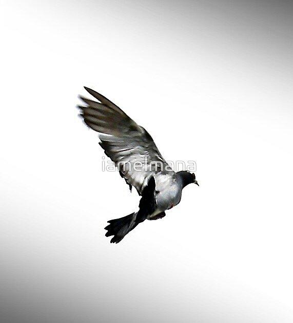 Flight  by iamelmana