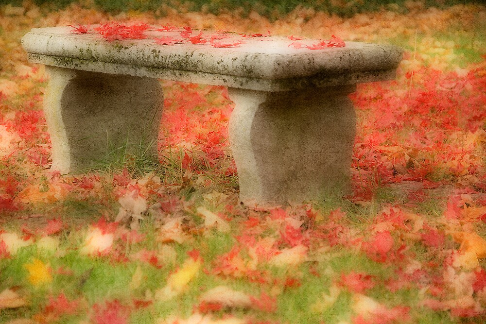 Bench in Late Autumn by Michael  Dreese