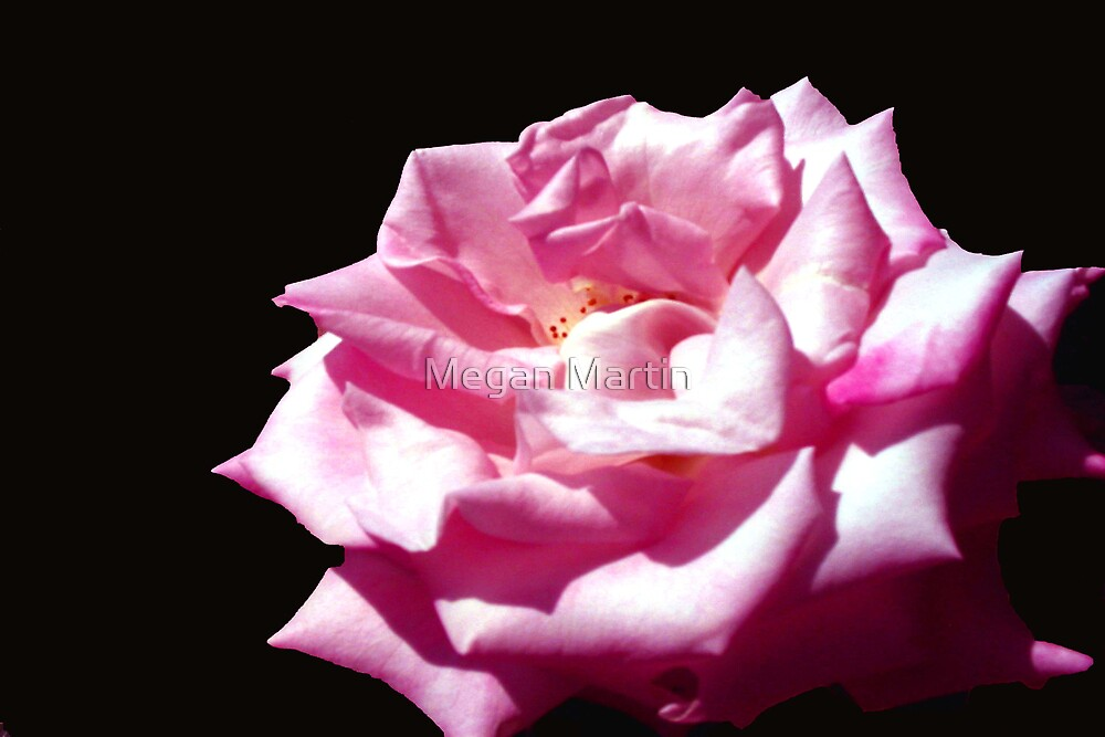Everythings Rosy by Megan Martin