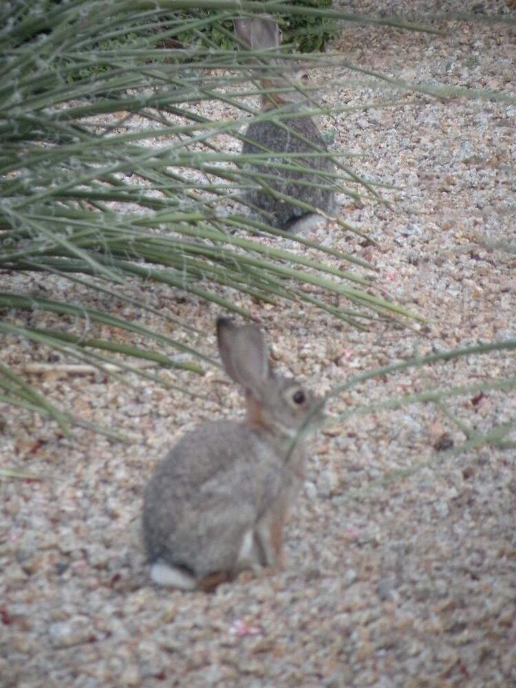 Rabbit fun! by Bonnie Pelton