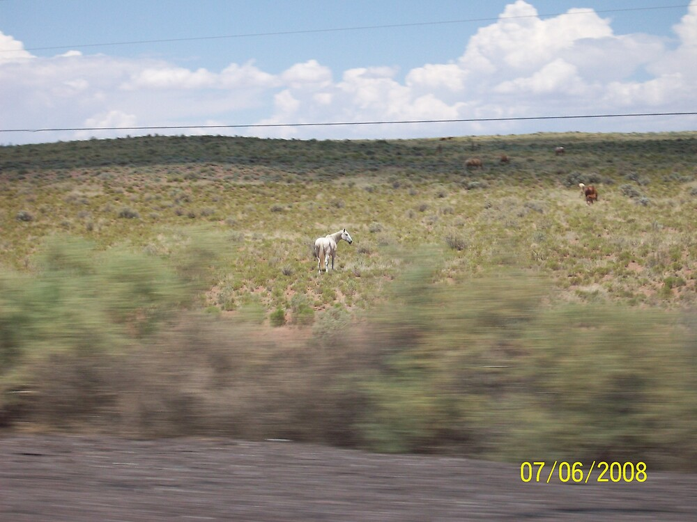 Horse in the Field, Arizona by HungarianGypsy
