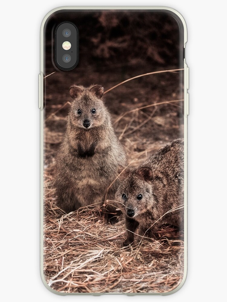 Quokkas - Western Australia (iPhone Case) by Dave Catley