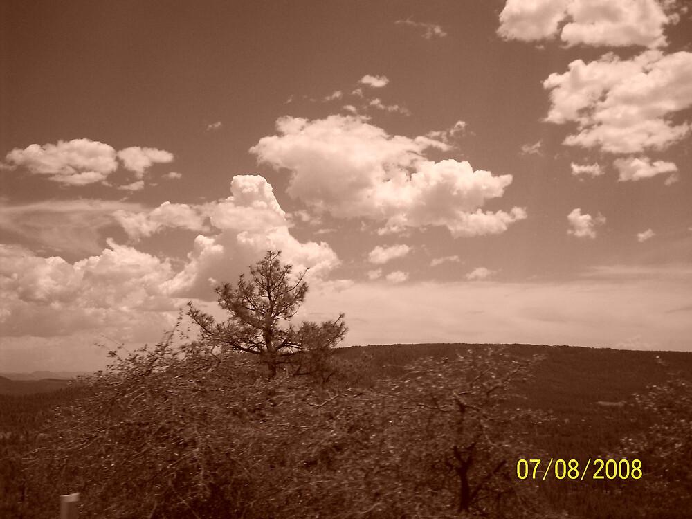 Woods Near Payson, Arizona by HungarianGypsy