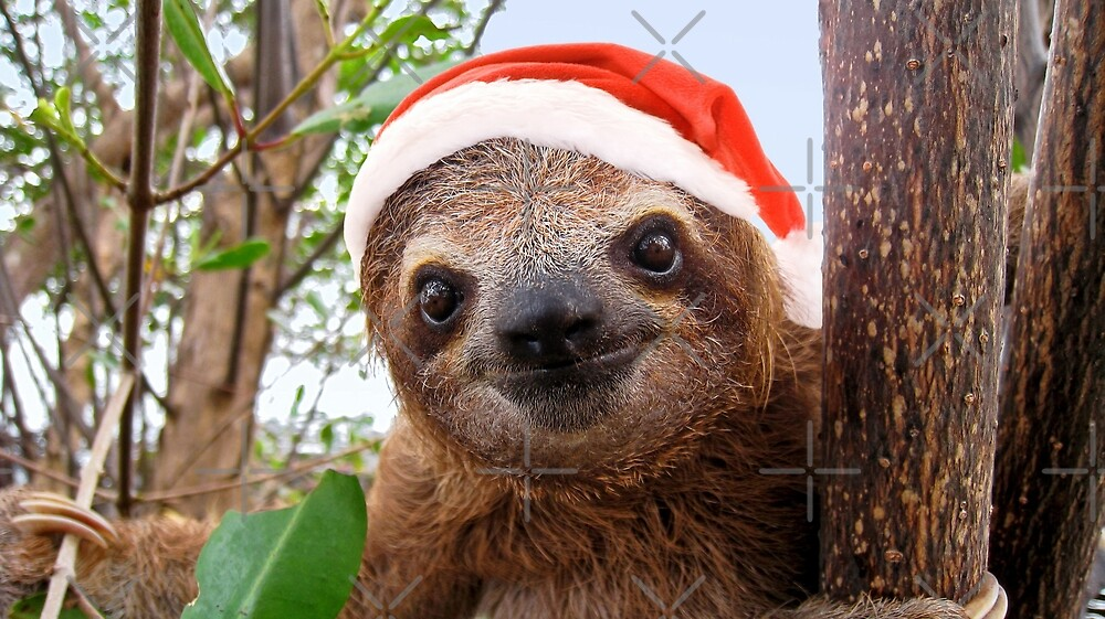Funny Baby Sloth In A Christmas Santa Hat By Dam Seaphotoart