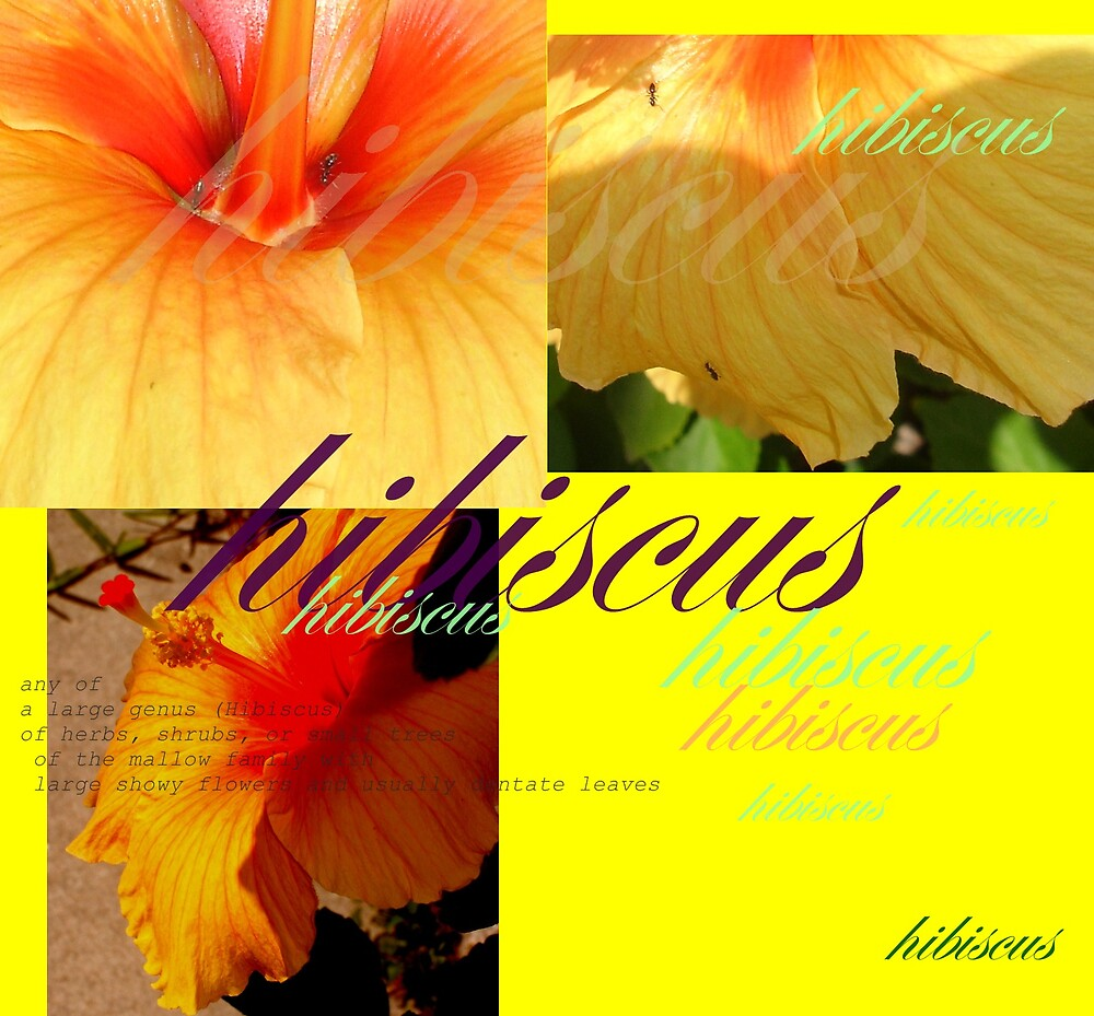 Hibiscus : Dictionary of an image  by Elizabeth Rodriguez