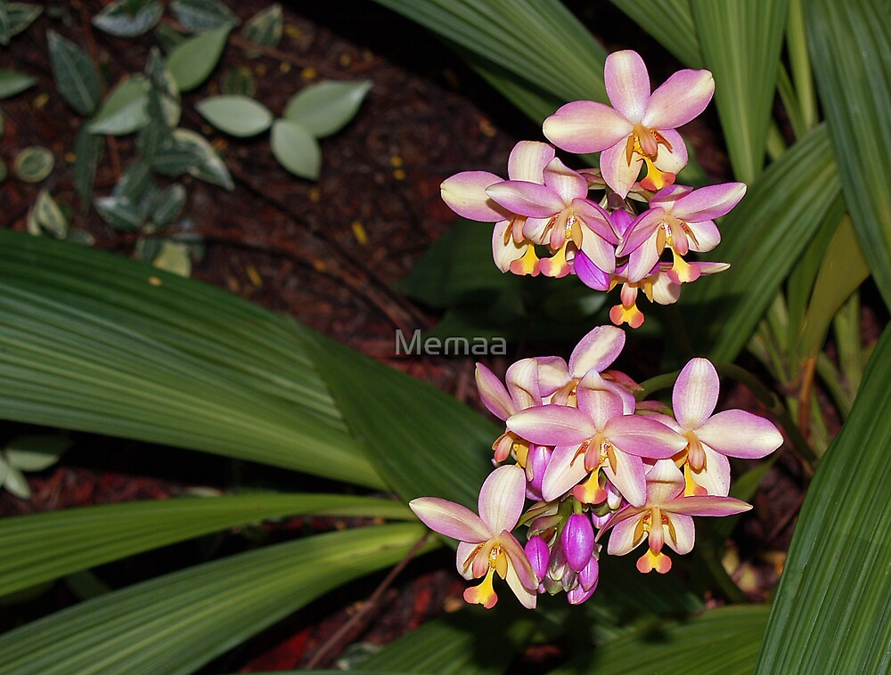 New Ground Orchids by Memaa