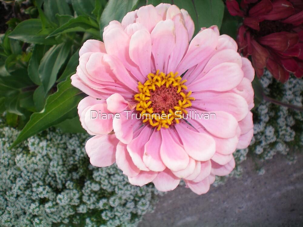 PINK for mother by Diane Trummer Sullivan