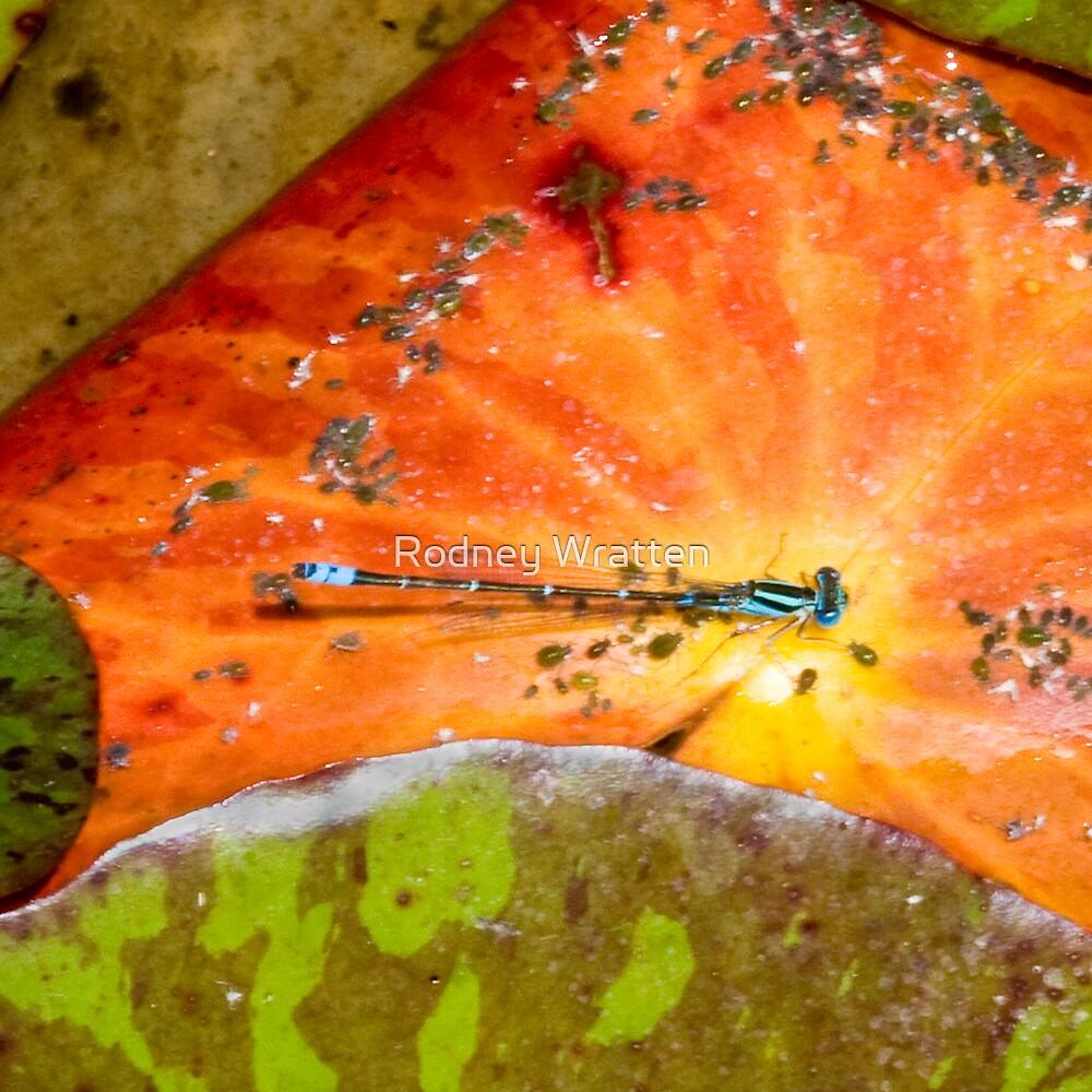 dragon fly by Rodney Wratten