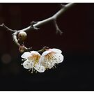 The First Spring Ume by 73553