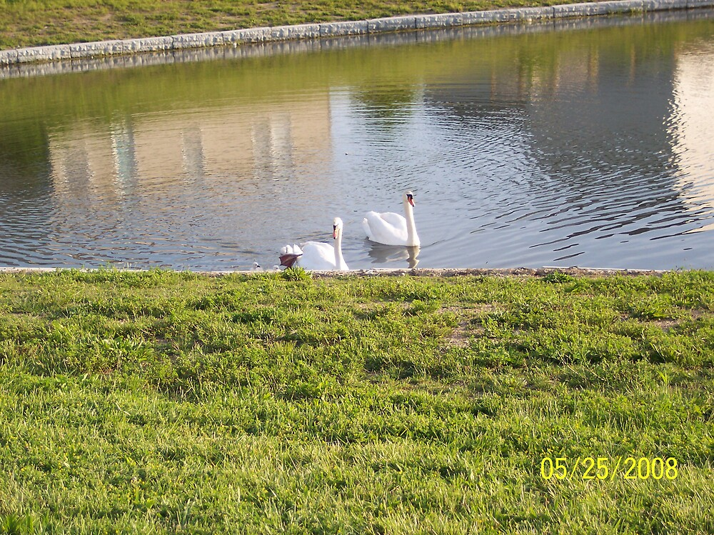swans 1 by phyllis Neff Garrett
