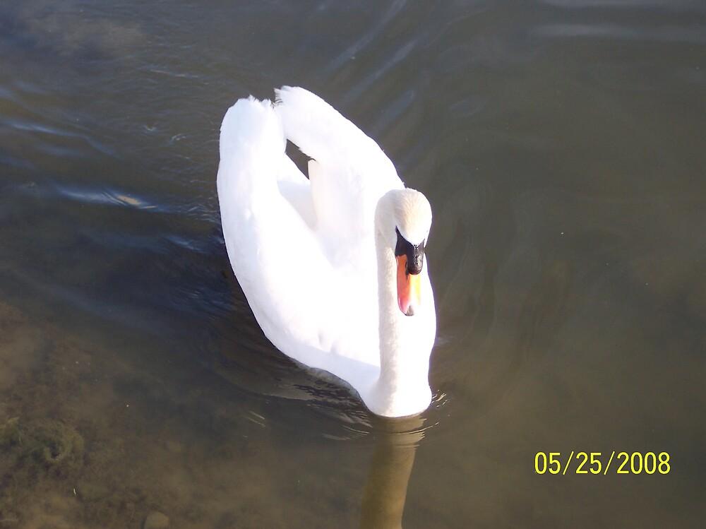 swans2 by phyllis Neff Garrett