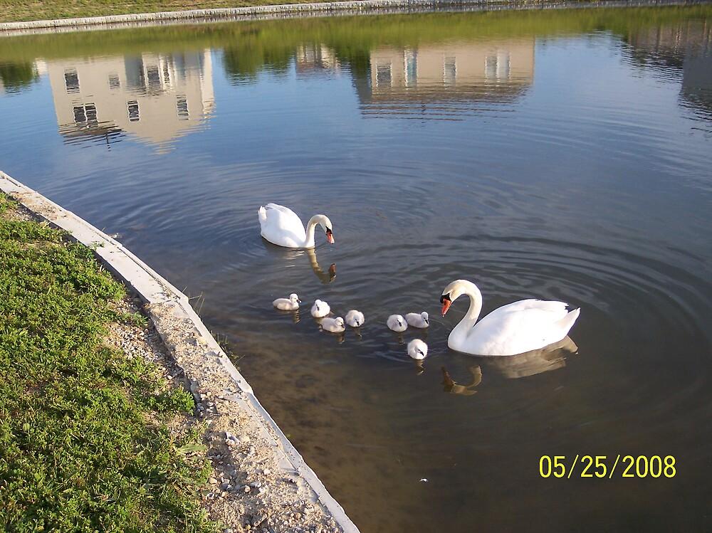 swans4 by phyllis Neff Garrett