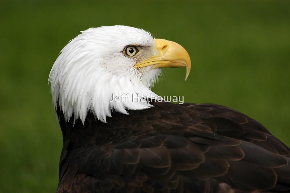Bald Eagle Portrait by Jeff Hathaway