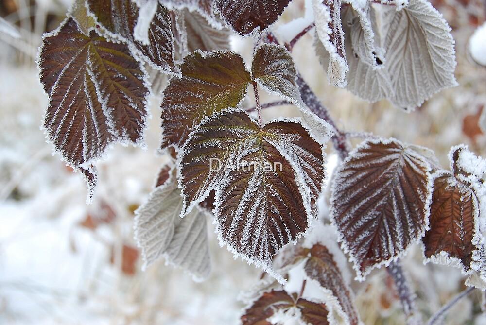 Frosty Leaves by DAltman