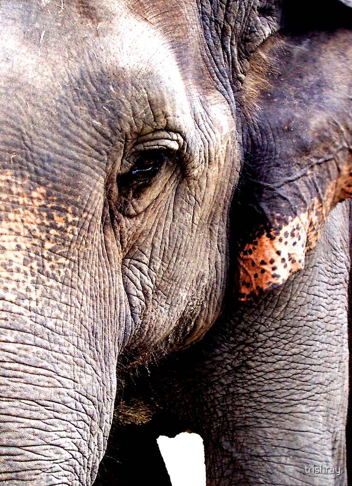 Elephant eye by trishray