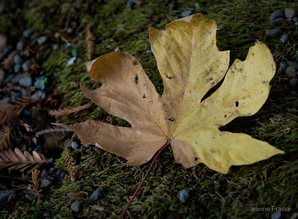 Autumn leaf by Jeanne Frasse