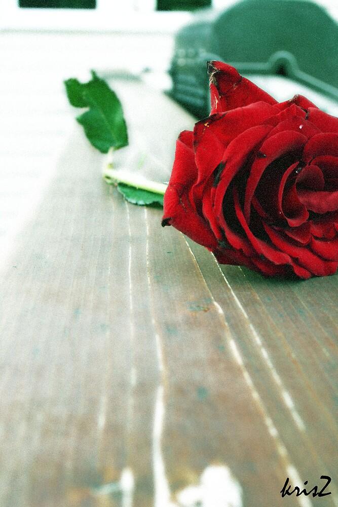 rose by Kris Z