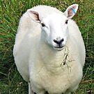 My Woolly Friend von BlueMoonRose