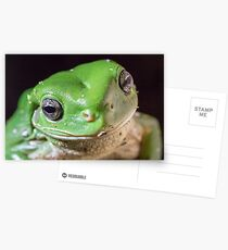 Green Tree Frog Postcards