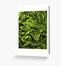 Green Wrapping Paper Texture Greeting Card