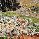 Colours of King Island 3 by Pauline Tims
