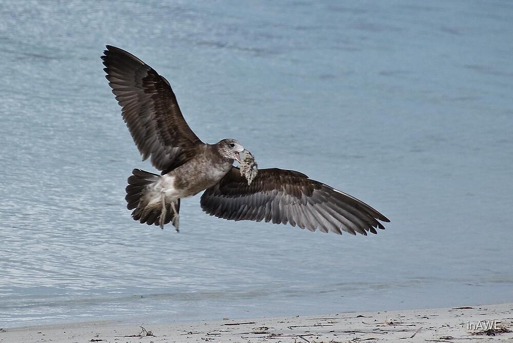 Seabird....... by inAWE