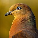 Brown Cuckoo-dove by theleastone