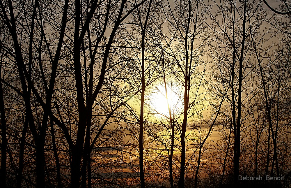 Autumn Evening Glow by Deborah  Benoit
